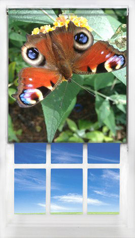 print your own blind example butterfly